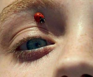 ladybug, eye, and tumblr image