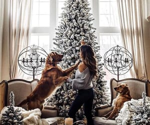 christmas, dog, and christmas tree image
