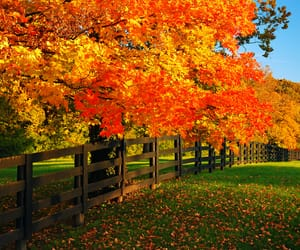 Image result for lexington ky