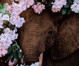 animal, elefante, and elephant image