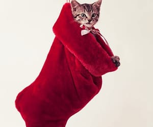 christmas, curious, and cute cat image