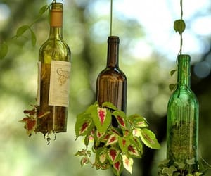 bottle, plants, and green image