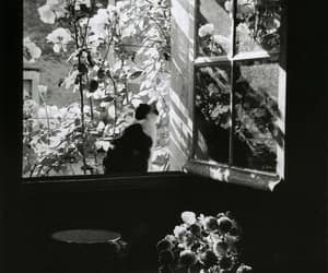 cat, black and white, and window image