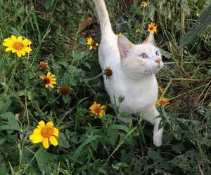 cat, flowers, and nature image