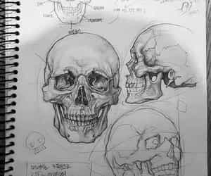 anatomy, medicine, and skull image