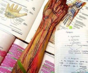 anatomy, medicine, and art image