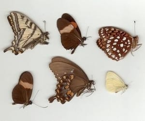 buterfly, 🌺, and mariposas image
