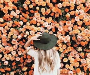 flowers, orange, and rose image