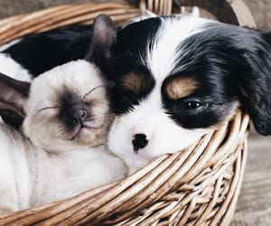 cat, dog, and kitten image