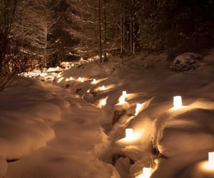 snow, forest, and lights image