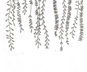 background, plants, and black and white image