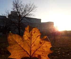 autumn, bucharest, and photography image