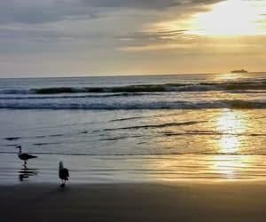 beach, bird, and praia image