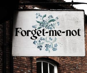 forget me not and love image