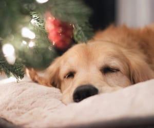 adorable, christmas, and christmas tree image