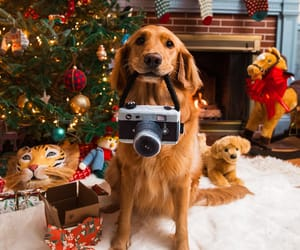 christmas and dog image