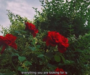 captions, green, and roses image