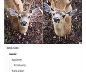 deer, forest, and funny image