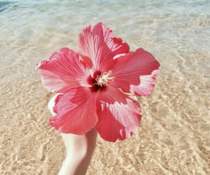 flowers, beach, and pink image