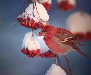 bird, photography, and wildlife image