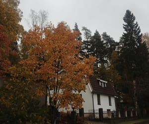 autumn, colours, and fall image