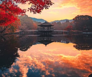 aesthetic, landscape, and automn image