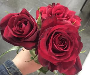red and rose image