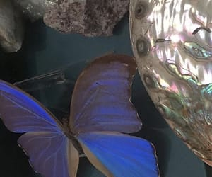 aesthetic, butterfly, and blue image