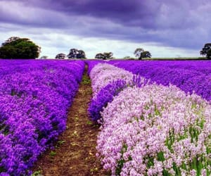 beautiful, blume, and colour image