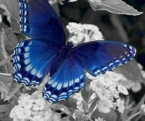 blau, ruhe, and hoffnung image