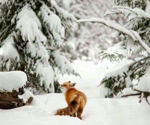 snow, fox, and winter image