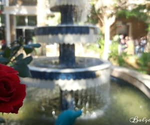 flower, fountain, and Libya image