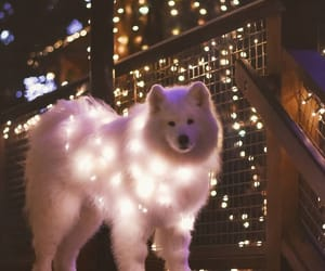 dog, dogs, and lights image
