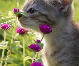 Animales, animals, and cats image