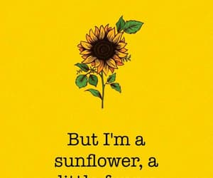 wallpaper, background, and sunflower image
