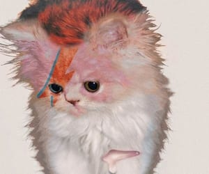 cat, david bowie, and kitten image