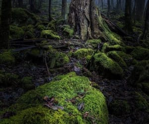 dark, forest, and quiet image