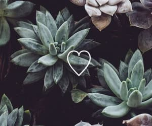 wallpaper, plants, and green image