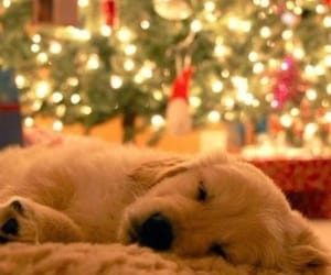 christmas, decorations, and dogs image