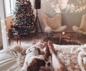 bedroom, christmas tree, and puppy image