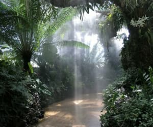 nature, green, and jungle image