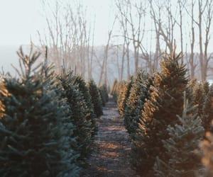 christmas, nature, and trees image