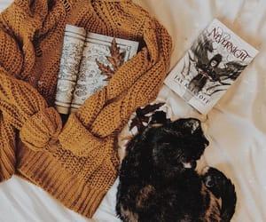 autumn, books, and cat image