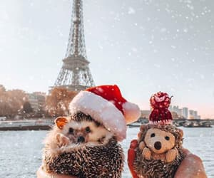 hedgehog, paris, and animals image