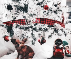 animals, christmas, and dogs image