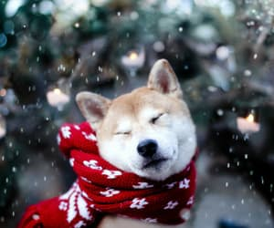 dogs and winter image