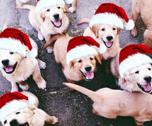 christmas and dogs image