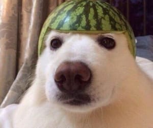 dog, funny, and watermelon image