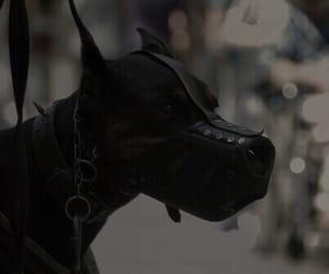 dog, doberman, and black image