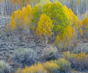 Autumn garden by David Thompson